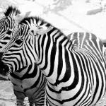 Животные001