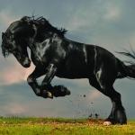 Животные052