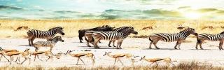 Животные020s