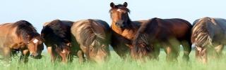 Животные054s