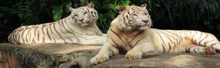 Животные071s