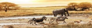 Животные016s