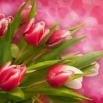 Цветы206
