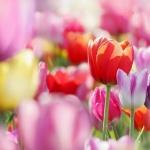 Цветы215