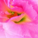 Цветы234