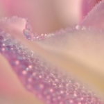 Цветы024