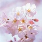 Цветы293