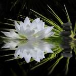 Цветы030