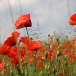Цветы057