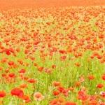 Цветы070