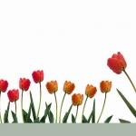 Цветы071