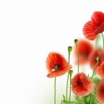 Цветы072