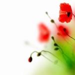 Цветы074