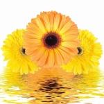 Цветы083