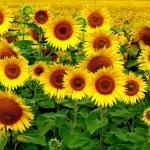 Цветы109