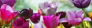 Цветы488s