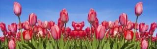 Цветы489s