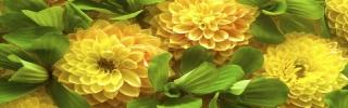 Цветы503s