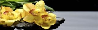Цветы510s