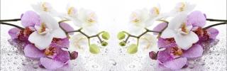 Цветы518s