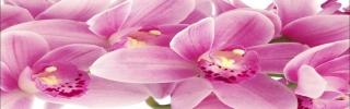 Цветы520s