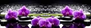 Цветы524s