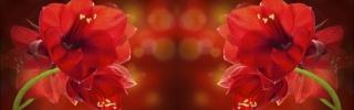 Цветы526s
