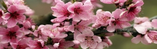 Цветы498s