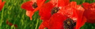 Цветы063s