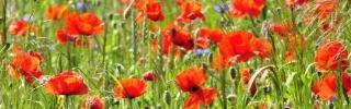 Цветы064s