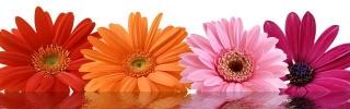 Цветы086s
