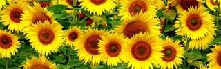 Цветы109s