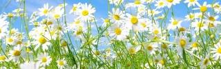 Цветы144s