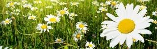 Цветы147s
