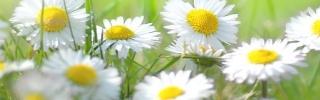 Цветы152s