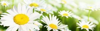 Цветы158s