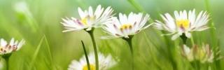 Цветы159s