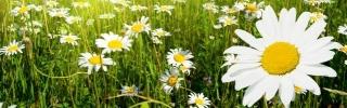 Цветы161s