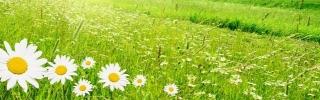 Цветы165s