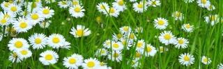 Цветы167s