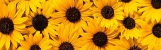 Цветы170s