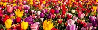 Цветы175s