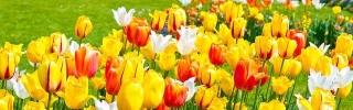 Цветы180s