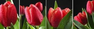 Цветы184s