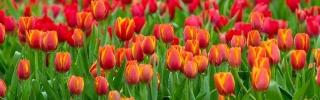 Цветы190s