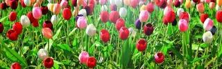 Цветы193s