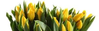 Цветы211_1s