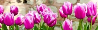 Цветы219s