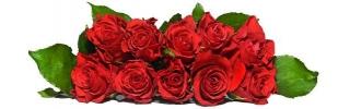 Цветы238s