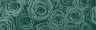 Цветы242_1s